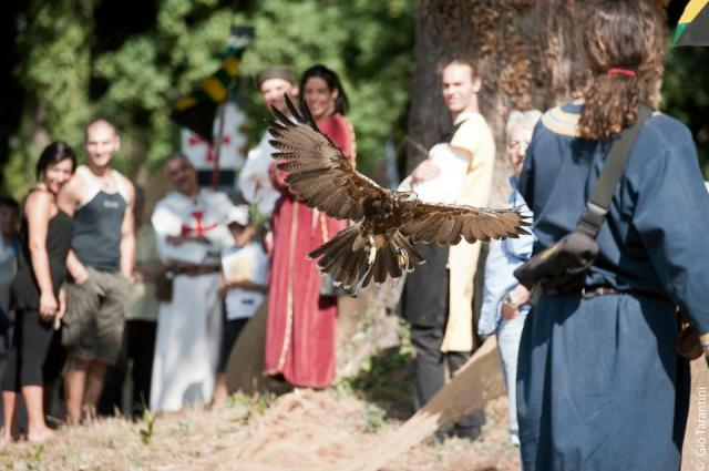 alberto lideo falconiere - foto falco 06 nella terra di ezzelino 2016
